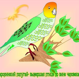 Курилин Тимофей_8 лет_ Каролинзкий попугай