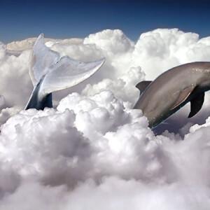 Борисов Виталий_14 лет Дельфин в облаках